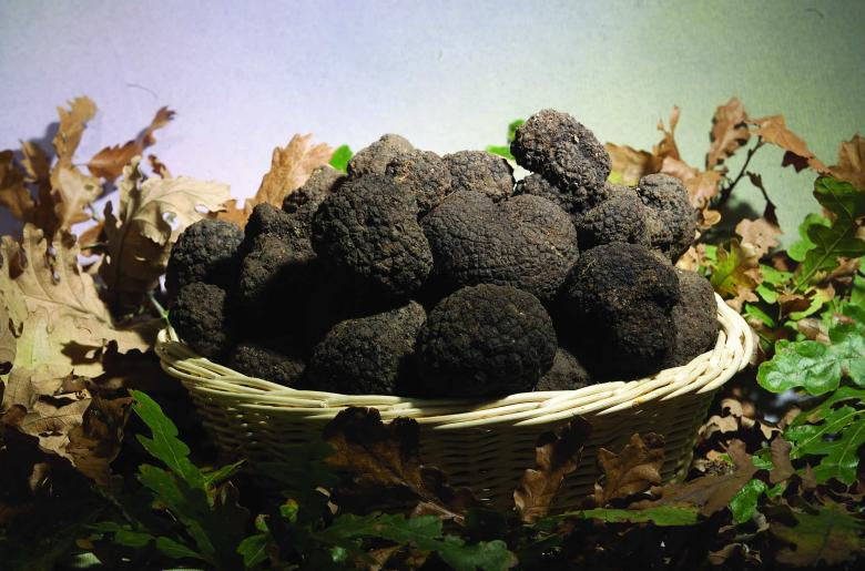 Tartufo nero in Umbria