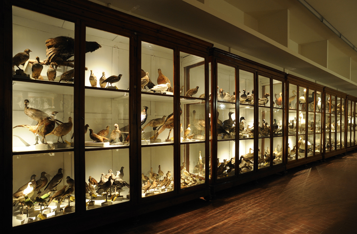 Gallery of Natural History - University Centre for the Science Museums (CAMS)