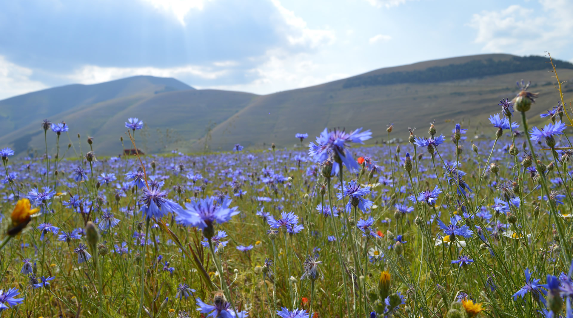 The Plains of Castelluccio di Norcia