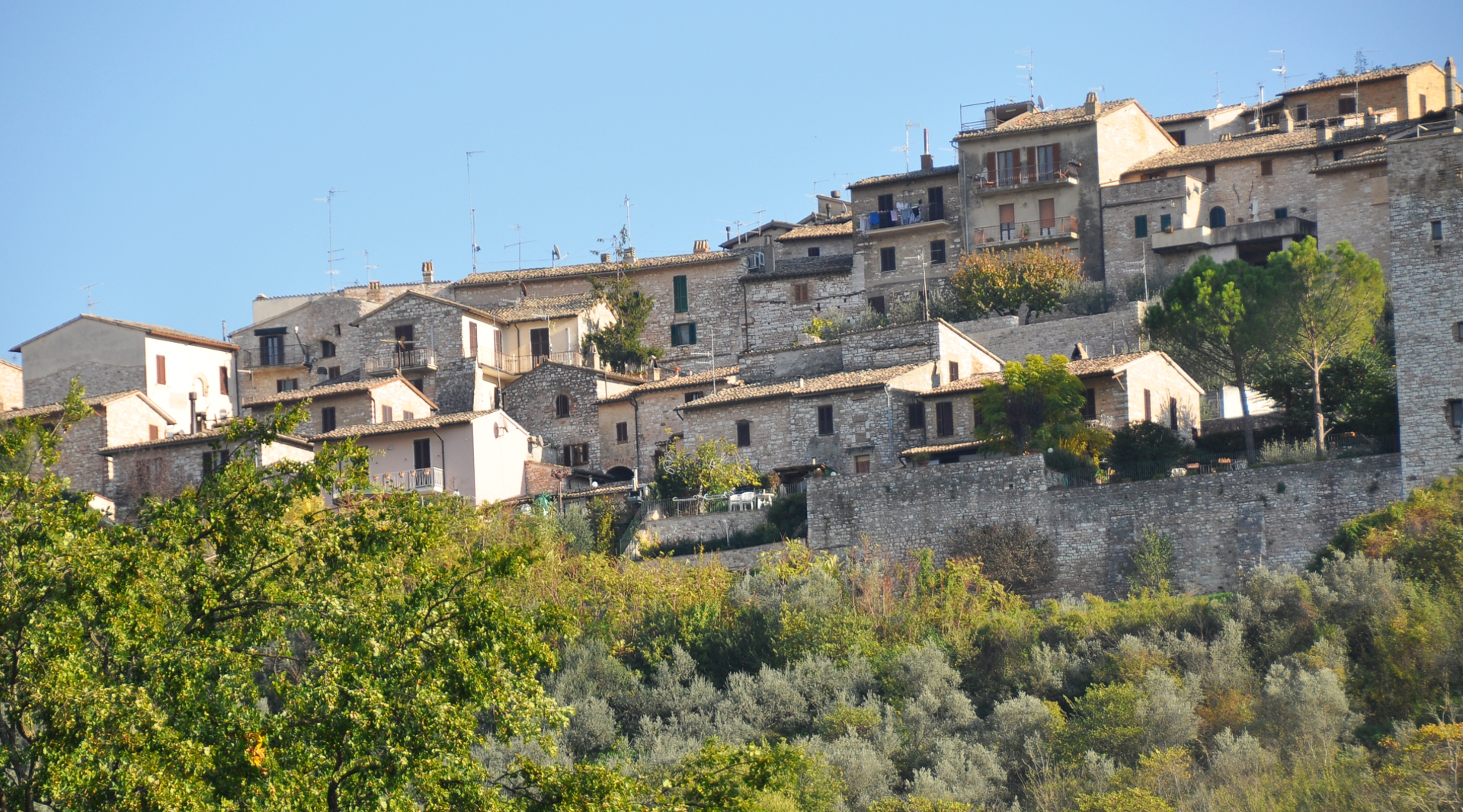 Landscape of olive groves on the hills of Spoleto and Assisi